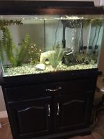 29 gallon aquarium with stand for sale