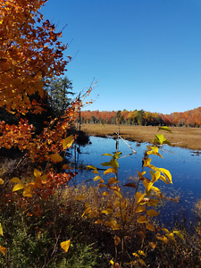 400 ACRES BEAVER POND WITH CREEK AND HARDWOOD AND SOFTWOOD BUSH