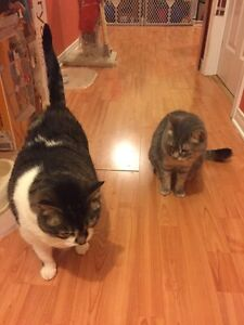 Two Lovely Cats looking for New Home Gatineau Ottawa / Gatineau Area image 1