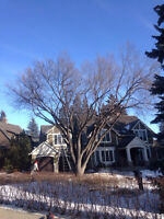 Airdrie Tree Care