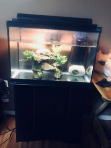 Axolotl with 20 gallon tank, stand, filter and accessories