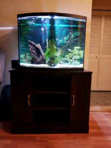 Price drop $200!!! 38 gallon bowfront and stand