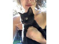 Black girl kitten