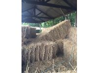 Hay in conventional small bales
