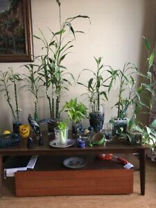Moving sale ( house plants, big mirror)