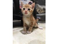Kittens ready to go now only 3 left!