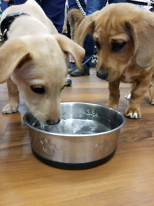 FREE Puppy Social @ Pet Valu Cole Harbour March 2nd 11-12pm