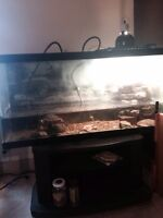 Complete turtle set up NEED GONE ASAP