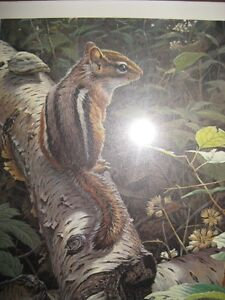 Chipmunk Picture by John Severy Lester # 594/950  Listed on the