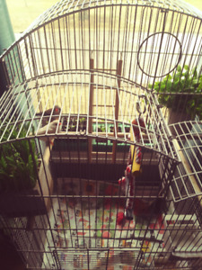 Birds (x2) and cage (Zebra Finches)
