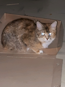Kitten year old