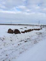 20 round hay bales sale pending