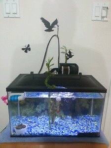 10 gallon with fish, shrimp everything needed