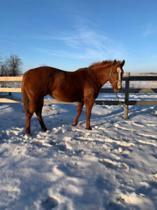 2013 MARE FOR SALE!!