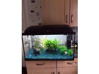 ⭐️⭐️ Aquael 90L fish tank / aquarium, with accessories & fish ⭐️⭐️