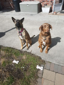 Engaged couple with 2 amazing dogs looking for long term home
