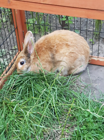 Rabbits for sale, Walthamstow