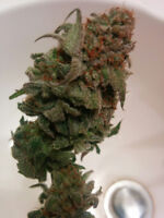 Work From Home, Be Your Own Boss, Grow Cannabis
