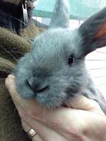 Rabbit - everybunny needs somebunny
