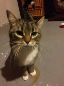 FOUND CAT IN AYLMER (MARINA)
