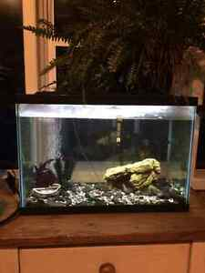 2 complete fish tanks with beautiful mature fresh water tropical
