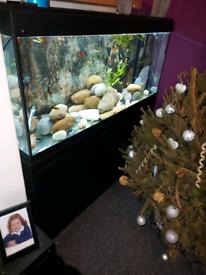 4 foot fluval fish tank
