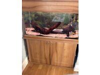 3ft fish tank £150 ONO