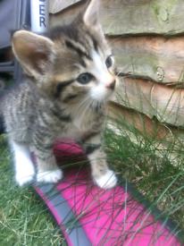 Beautiful Kittens!!