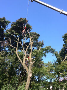 Tree Removal  Service * Free Quote*