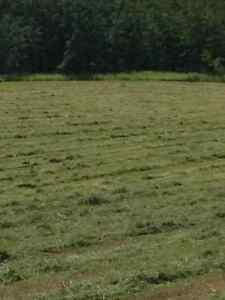 Cow hay $90 per bale delivered price Edmonton Edmonton Area image 3