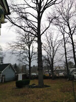 TREE REMOVAL 647 607 4924