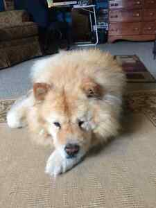 PET SITTING WHILE YOU GO ON VACATIONS Kitchener / Waterloo Kitchener Area image 10