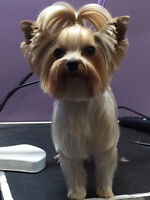 Groomer Wanted! At The Second Pup and Kitties Too