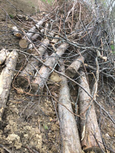 free red pine trees logs approx 20-25