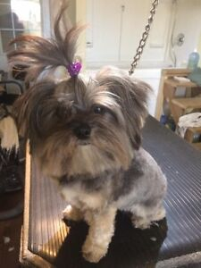 Paws Fur Effects Pet Grooming