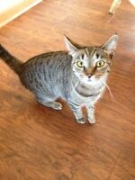 2 female cats need homes FREE