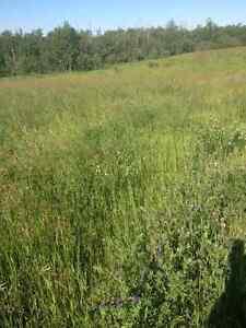 Cow hay $90 per bale delivered price Edmonton Edmonton Area image 4