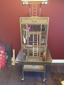 Year and a half old conure with cage and accessories