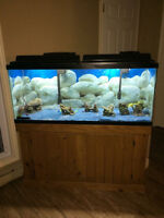 New Price drop! Huge aquarium with all accessories and stand!