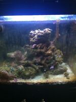 30 Gallon Salt Water Tank with fish and coral