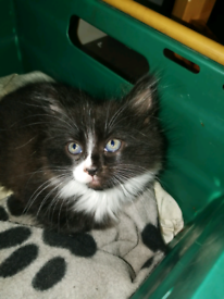 Part pedigree kittens need new homes