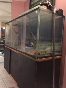 120 galon fish tank