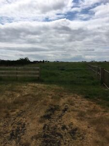 2 large grass paddocks for horses for rent