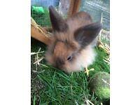 Beautiful baby bunny