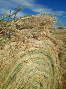 Bales for sale $50