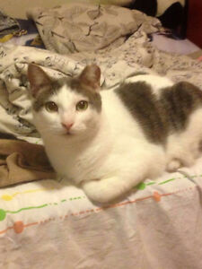 Lost cat nearby keats way and shakspeare dr