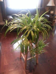 Healthy Plant Purchased from Sheridan Nurseries