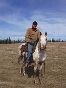 """2013 ApHcc filly """"Im Mighty Brite Lady"""" Williams Lake Cariboo Area image 1"""