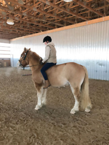 Round pens can be powerful tools for developing or maintaining a  relationship with a horse.
