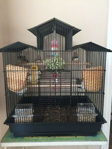 Finches 4 SALE!